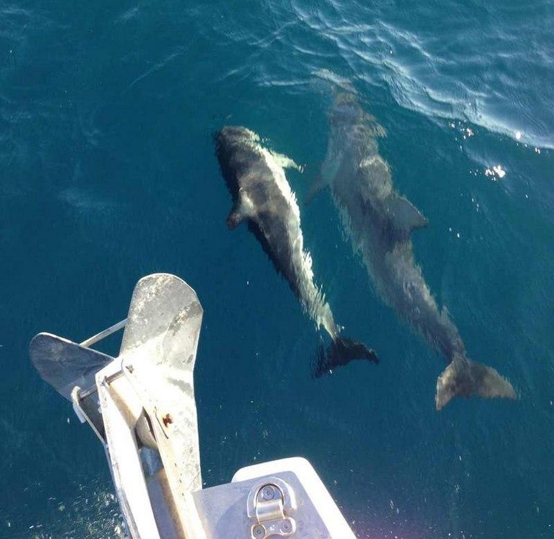 Яхта и дельфины